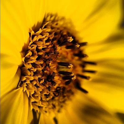 Sunflowers Wall Art - Photograph - Sun Flowers Are Just Beautiful by Daniel Jongue