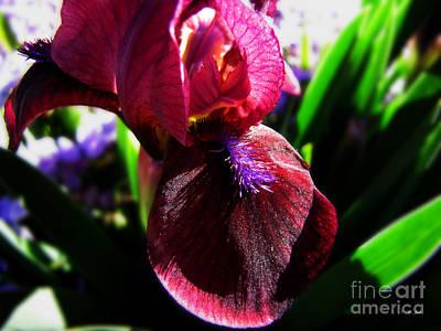 Sun Glistening Iris Art Print