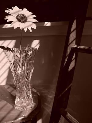 Art Print featuring the photograph Sun In The Shadows by Lynnette Johns
