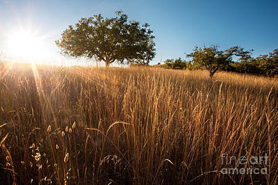 Wheat Silhouette Photograph - Sun-kissed California Meadow by Matt Tilghman