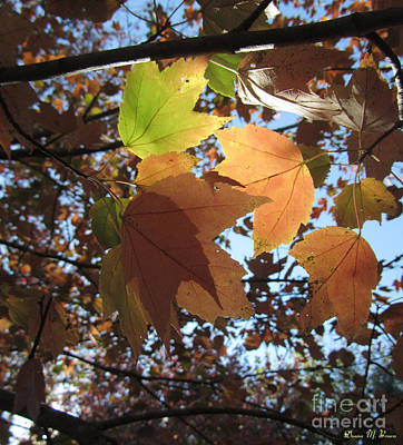 Photograph - Sun-lite Fall Leaves by Donna Brown