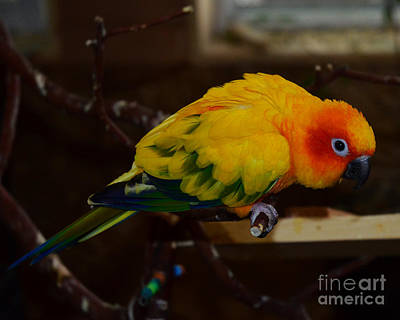 Photograph - Sun Parrot by Jack Moskovita