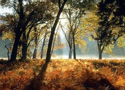 Sun Rays Passing Through Golden Trees  Art Print by ilendra Vyas