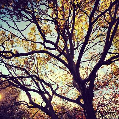 Y120831 Photograph - Sun Shining Through Autumn Leaves by Jodie Griggs