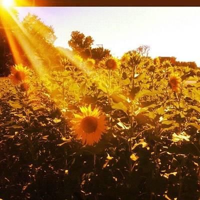Golden Wall Art - Photograph - #sun #sunflower by Levi Golden