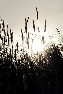 Photograph - Sun Through The Grass by Anthony Doudt