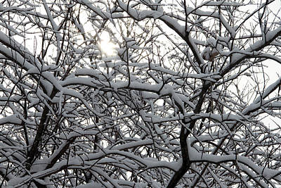 Photograph - Sun Through The Snowy Branches by Mark J Seefeldt
