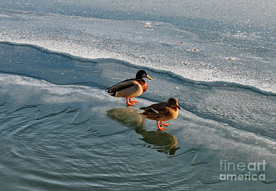 Sunbath On Ice Art Print