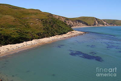 Sunbathing Elephant Seals Along A Beach At Point Reyes California . 7d16058 Art Print