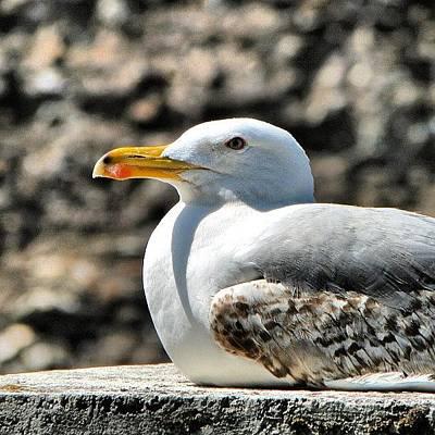 Still Life Photograph - Sunbathing Gull by Chi ha paura del buio NextSolarStorm Project