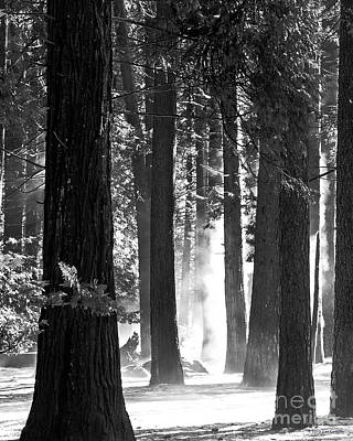 Photograph - Sunbeams Through The Trees Yosemite National Park by Nature Scapes Fine Art