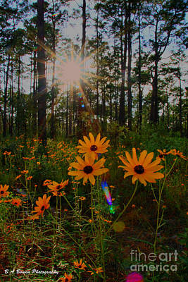 Photograph - Sunburst On Sunflowers by Barbara Bowen