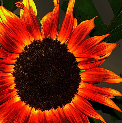 Photograph - Sunfire by Ramona Johnston
