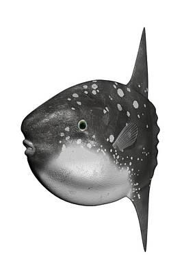 Sunfish Digital Art - Sunfish by Koji