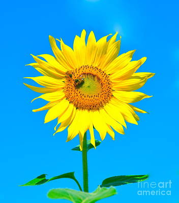 Sunflower And Bee Art Print by Debbi Granruth