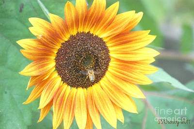 Aloha For Days - Sunflower and Bee by Susan Stevens Crosby