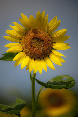 Sunflower Bow Art Print