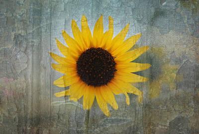 Sunflower Burst Art Print by Lisa Moore