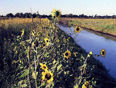 Photograph - Sunflower Canal by Eunice Olson