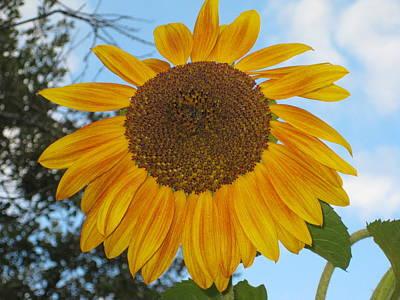 Sunflower Art Print by Carolyn Reinhart