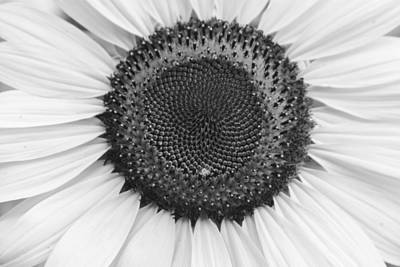 Photograph - Sunflower Center Black And White by James BO Insogna