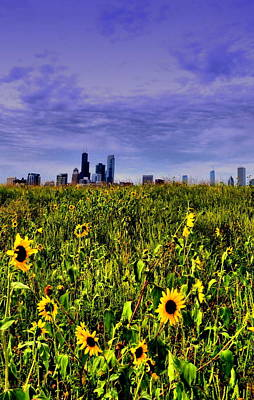 Photograph - Sunflower Chicago by Emily Stauring