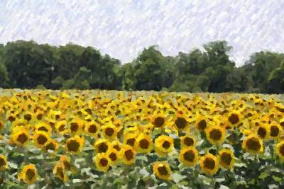 Art Print featuring the photograph Sunflower Field by Donna  Smith