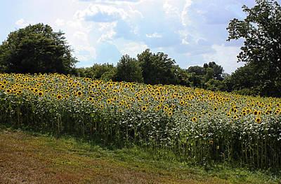 Sunflower Field Art Print by Kristin Elmquist