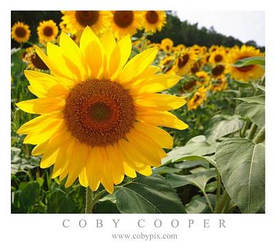 Photograph - Sunflower Fields by Coby Cooper