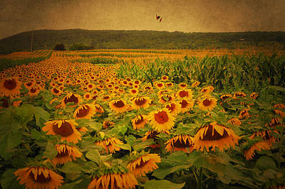 Photograph - Sunflower Flip by Emily Stauring