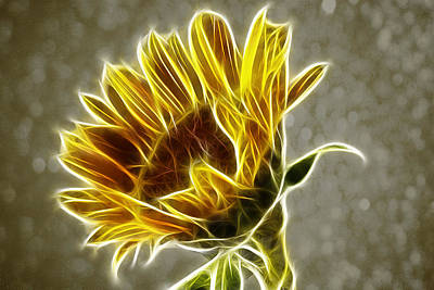 Photograph - Sunflower Fractalius by Fiona Messenger