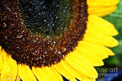 Sunflower Glitter Art Print by Susan Herber