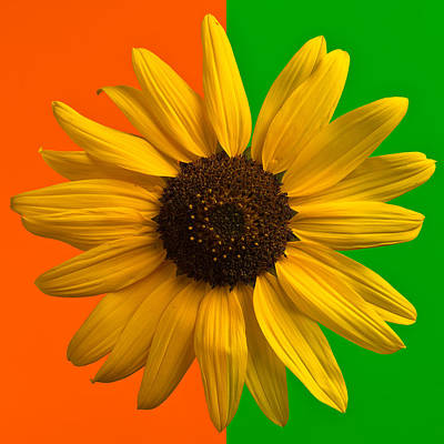 Sunflower In Orange And Green Original