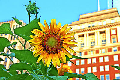 Art Print featuring the photograph Sunflower In The City by Alice Gipson
