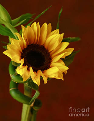 Sunflower  Art Print by Inspired Nature Photography Fine Art Photography
