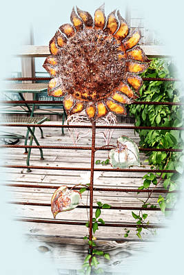 Photograph - Sunflower by Kelly Reber