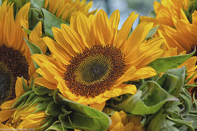 Art Print featuring the photograph Sunflower by Linda Karlin