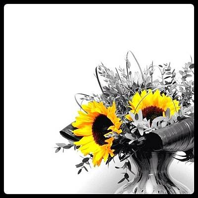 Iphoneonly Photograph - Sunflower by Mark B