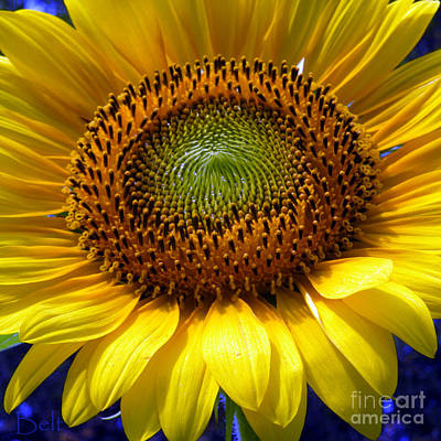 Snickerhaus Gallery Photograph - Sunflower No.22 by Christine Belt