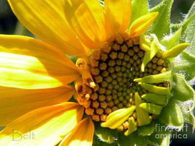 Sunflower No.3 Art Print by Christine Belt