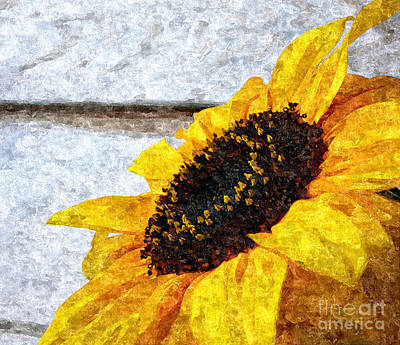 Sunflower Paint Art Print by Slavi Begov