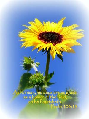 Sunflower Psalm 103 Art Print