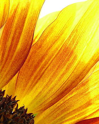 Photograph - Sunflower by Ramona Johnston
