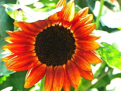 Sunflower Art Print by Rhiannon Hamm