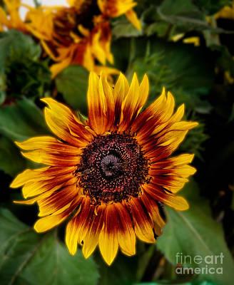 Sunflower Art Print by Robert Bales