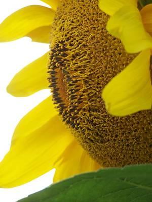 Sunflower Seeds Original