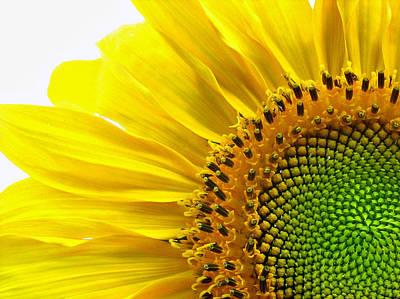 Sunflower Segments Art Print by Bruce Carpenter