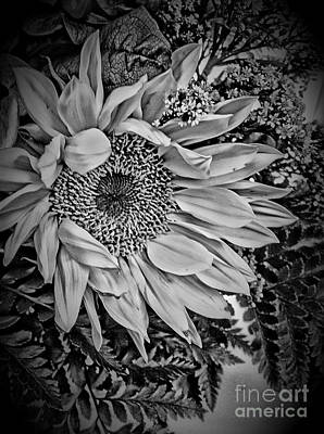 Photograph - Sunflower Study by Jill Smith