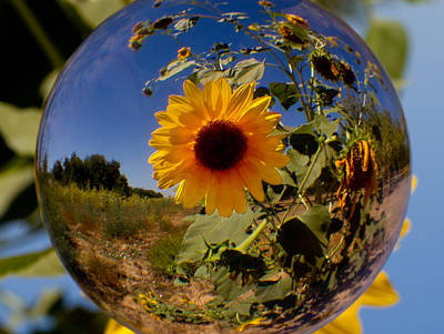 Photograph - Sunflower Through A Glass Eye by Robert Woodward