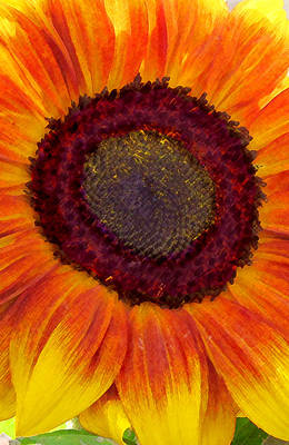 Digital Art - Sunflower by Timothy Bulone